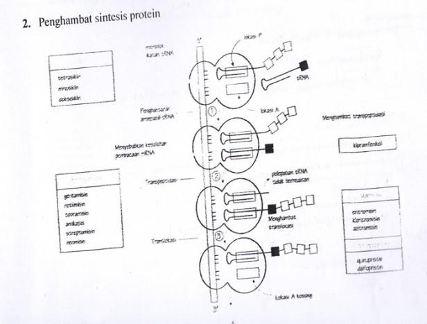 Hasil diskusi antimikroba syahrul latif gambar 2 penghambat sintesis protein ccuart Images